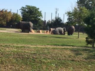 BuffaloSculptures