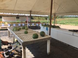 VeggieStand