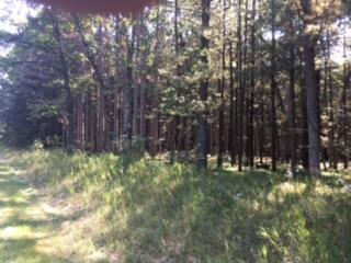 Plantationforest