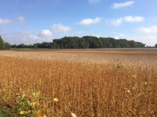 Stripedfield